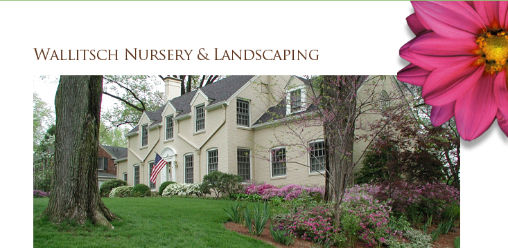 Wallitsch Nursery Landscaping & Landscape Design - Louisville ... on small outside fireplace designs, outside floral designs, outside trellis designs, outside home designs, outside deck designs, outside pond designs, outside waterfalls designs, outside paint designs, outside entrance designs, outside kitchen designs, outside flower bed designs, outside interior designs, outside patio designs, outside building designs, outside walkways designs, outside pool designs, outside porch designs, outside stone wall designs, outside bbq pit designs, outside border designs,
